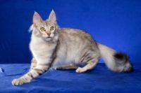 Kitten 2 Rudy