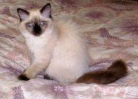 Kitten 12 Ziva 2020