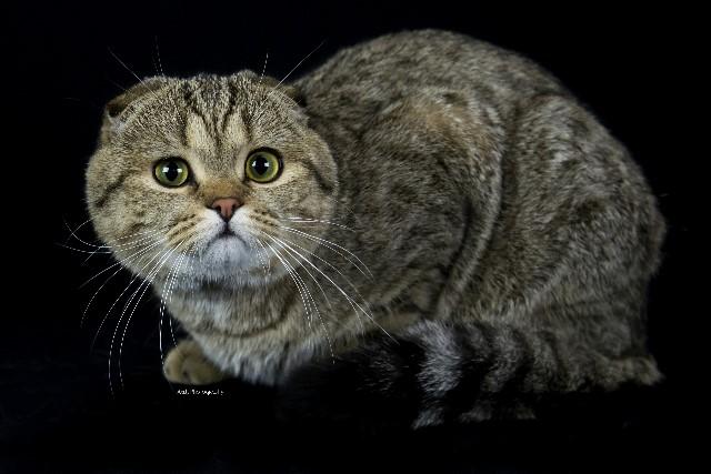 Kitten 13 Second Son