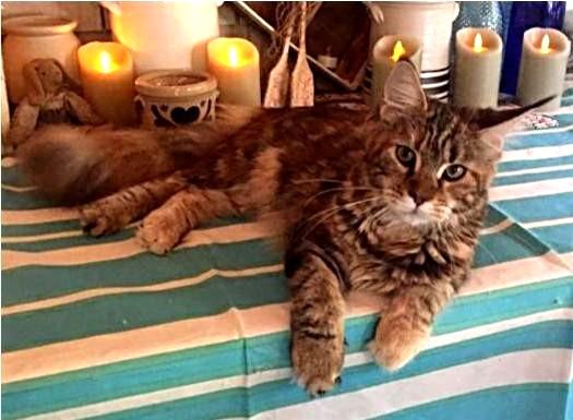 Kitten 14 Dawnesearlylight