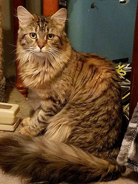 Kitten 16 Purr Joy