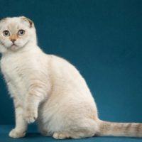 Kitten 20 Mc Bonnie Bee
