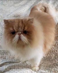 Kitten 3 Rubert
