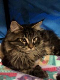 Kitten 7 ButchCatsidy