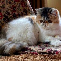 Kitten11 Sassy Pants