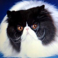 Top 13 Cat 2020